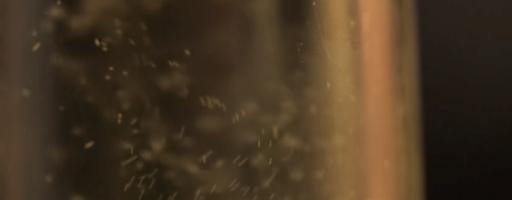 Crémant : le champagne «bon plan»